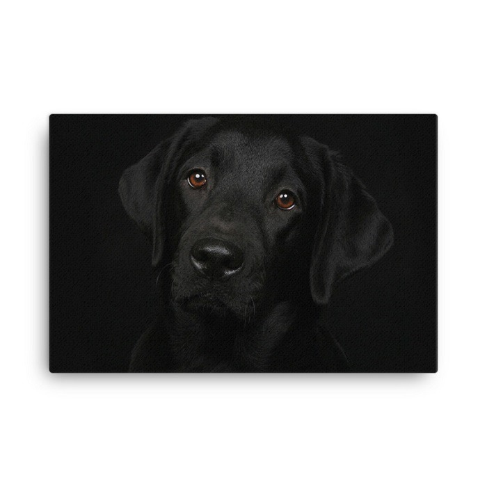 Black Labrador Dog Wall Art Hd Portrait