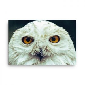 Hedwig - The Harry Potter Canvas Art HD - harry potter canvas, harry potter owl, harry potter poster, harry potter wall art, hedwig, harry potter gifts, owl canvas wall art, owl christmas decorations, owl home decor, large wall art, animal canvas art, animal wall art, wildlife wall art, harry potter prints, harry potter wall decor