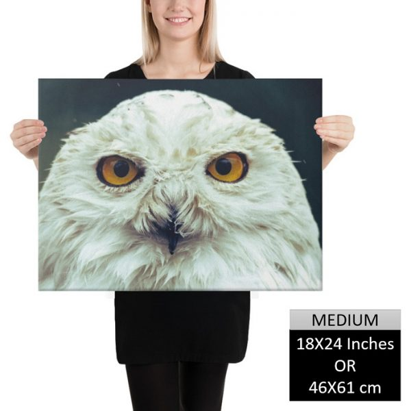 Hedwig – The Harry Potter Canvas Art HD