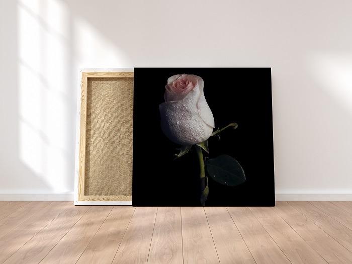 White rose wall art HD flower wall art