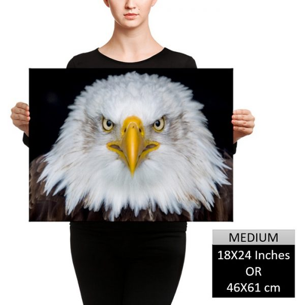 Stay Laser Focused – Bald Eagle Inspiration Wall Art