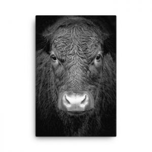 Inspirational bull wall art animal canvas art