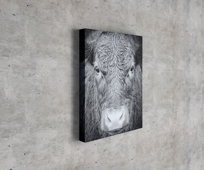 New Keep Persistence - Taurus Bull Inspirational bull wall art animal canvas art